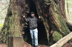 Loon stands inside an old redwood tree