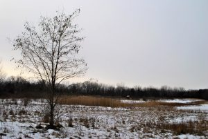 A barren field is lightly dusted with snow