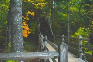 Staircase in the autumn woods